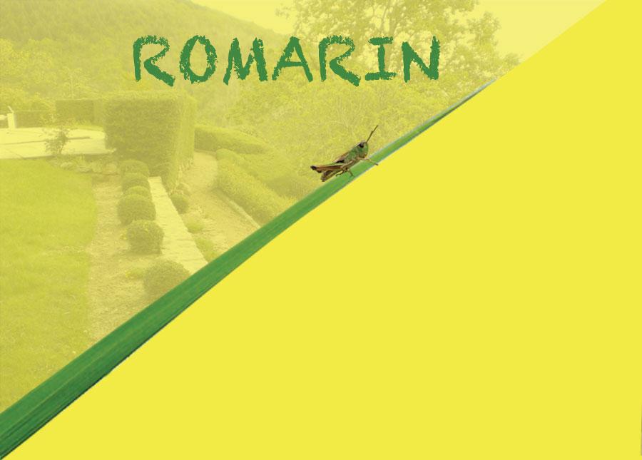 romarin paysagiste